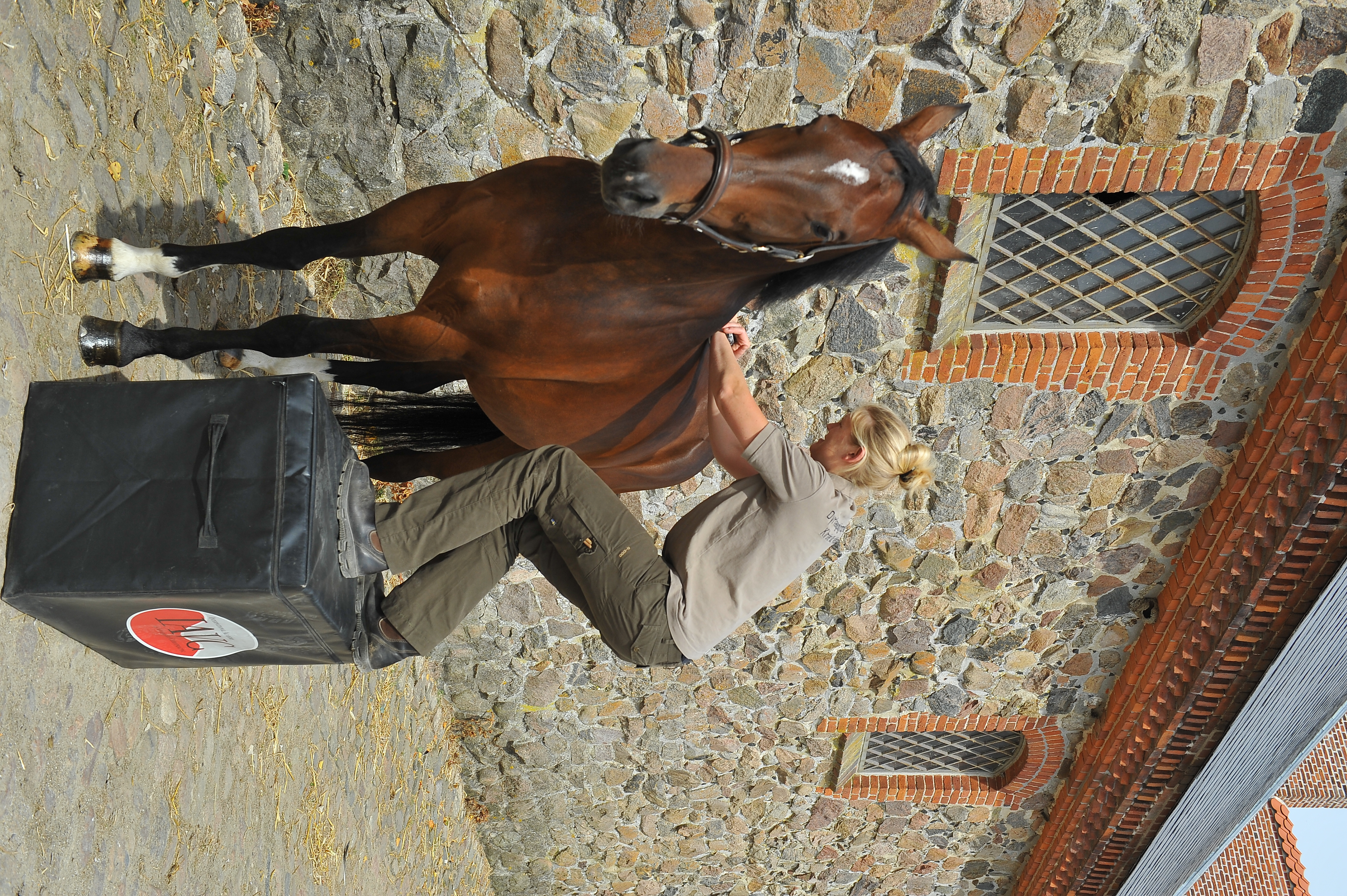 Kiropraktik hest 19