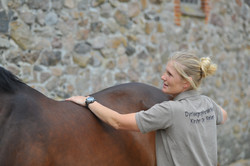 Kiropraktik hest 14