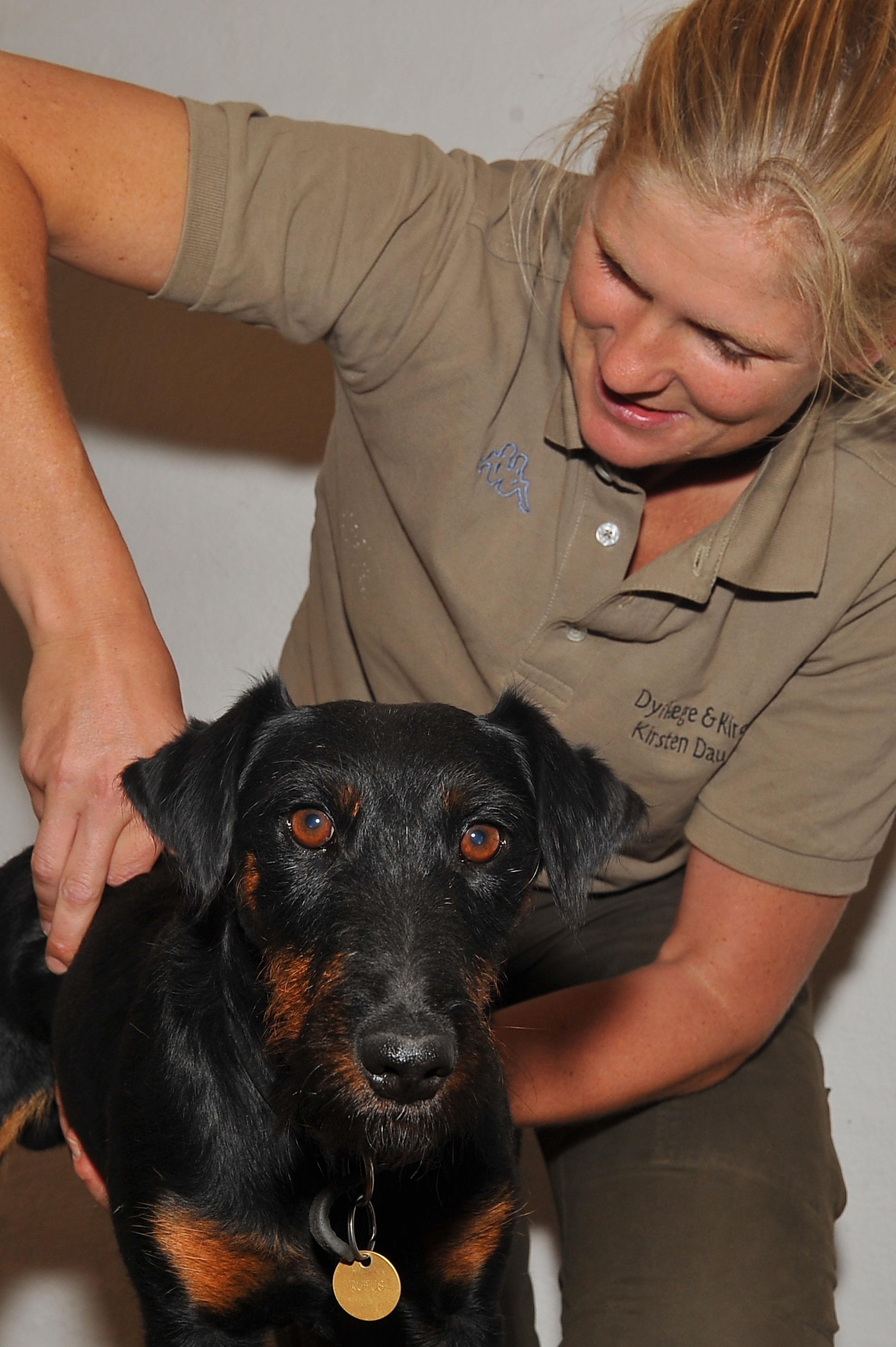 Kiropraktik hund 10