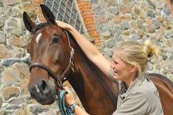 Kiropraktik hest 28