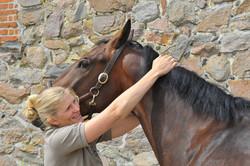 Kiropraktik hest 27