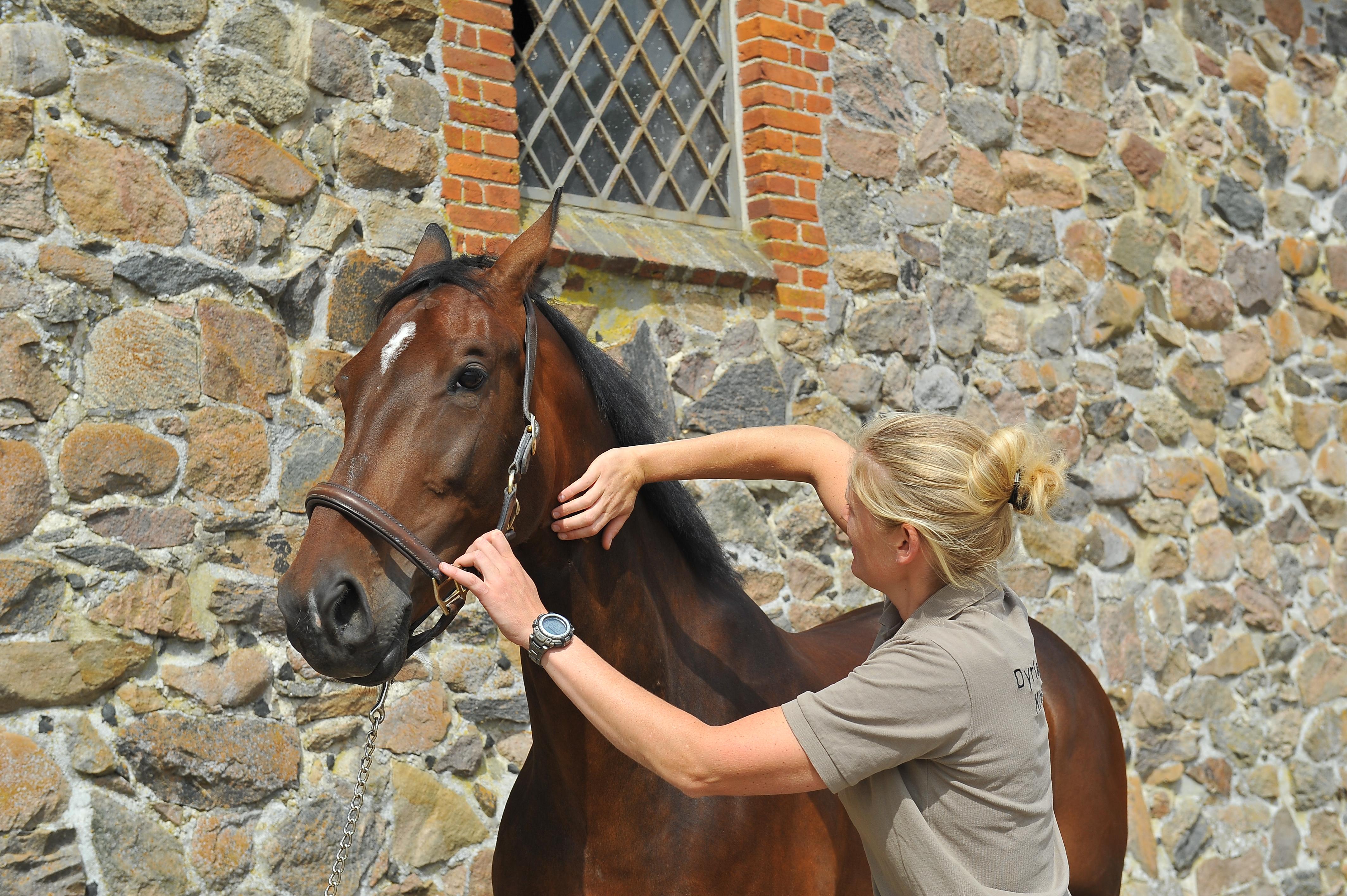 Kiropraktik hest 24
