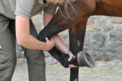 Kiropraktik hest 37