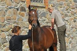Kiropraktik hest 9