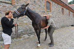 Kiropraktik hest 44