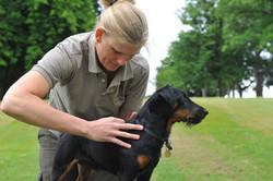 Kiropraktik hund 13