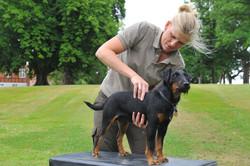 Kiropraktik hund 11