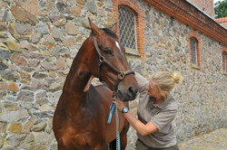 Kiropraktik hest 26