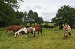 Kiropraktik hest 5_150dpi