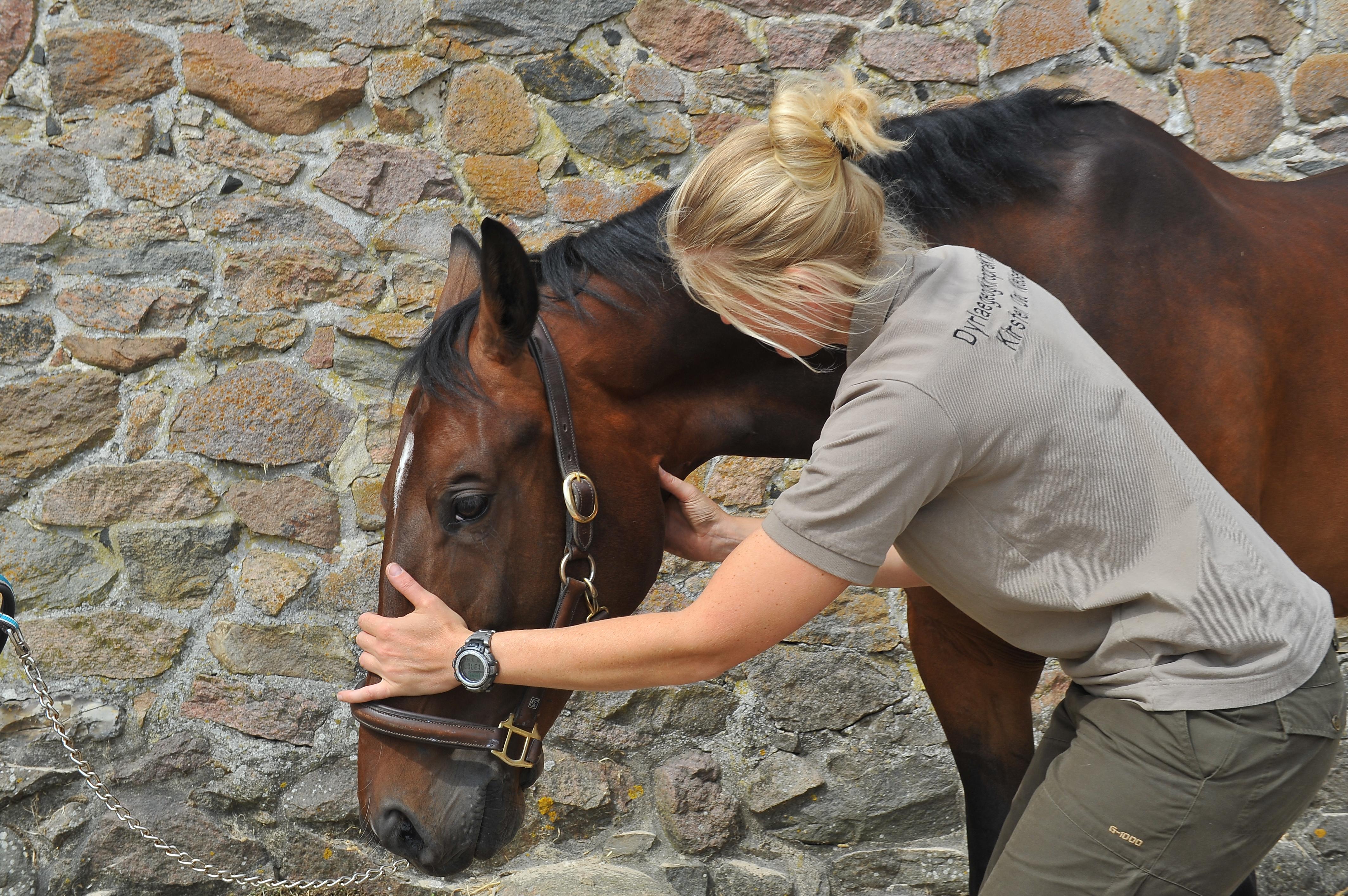 Kiropraktik hest 29