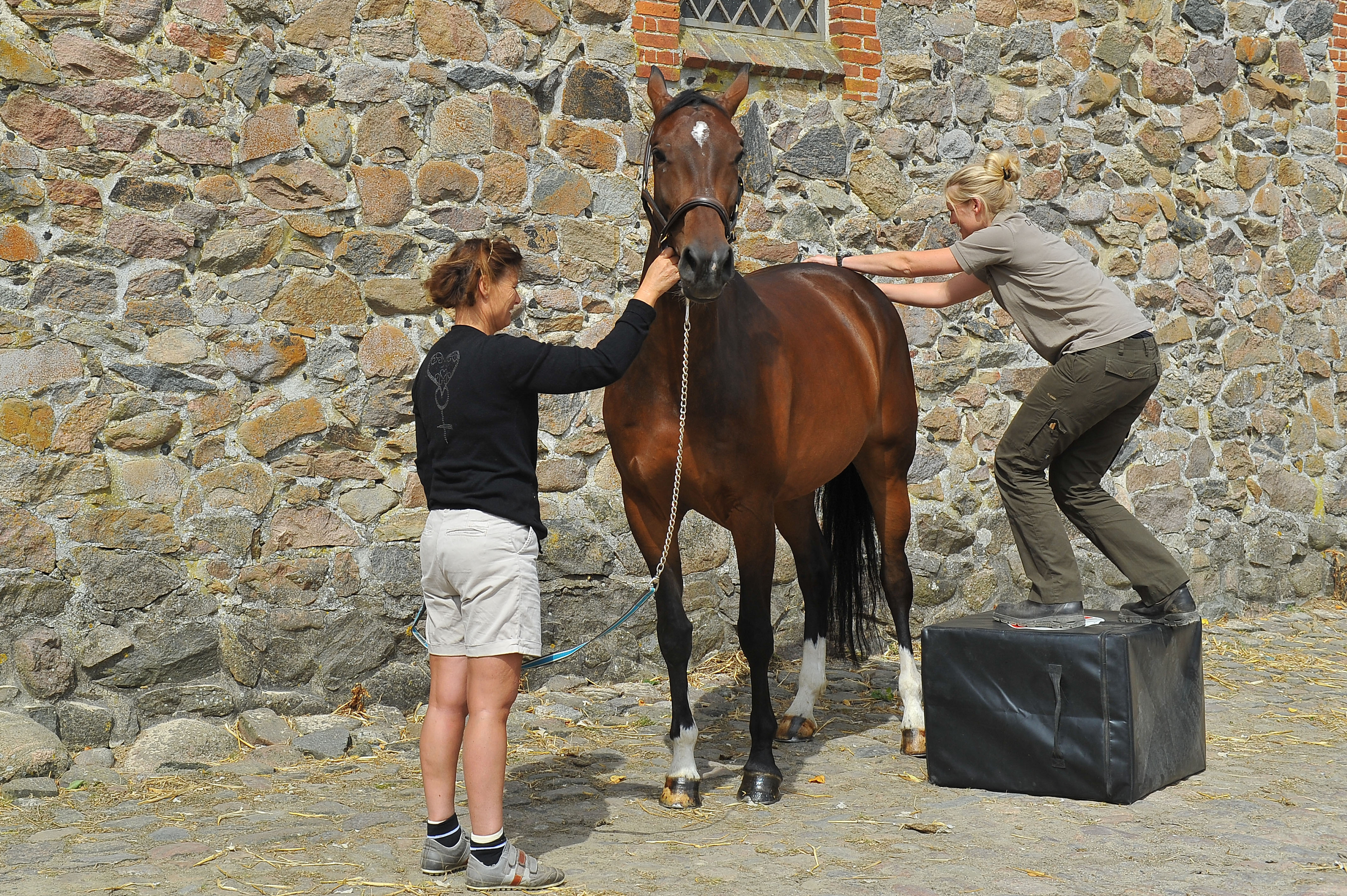 Kiropraktik hest 13