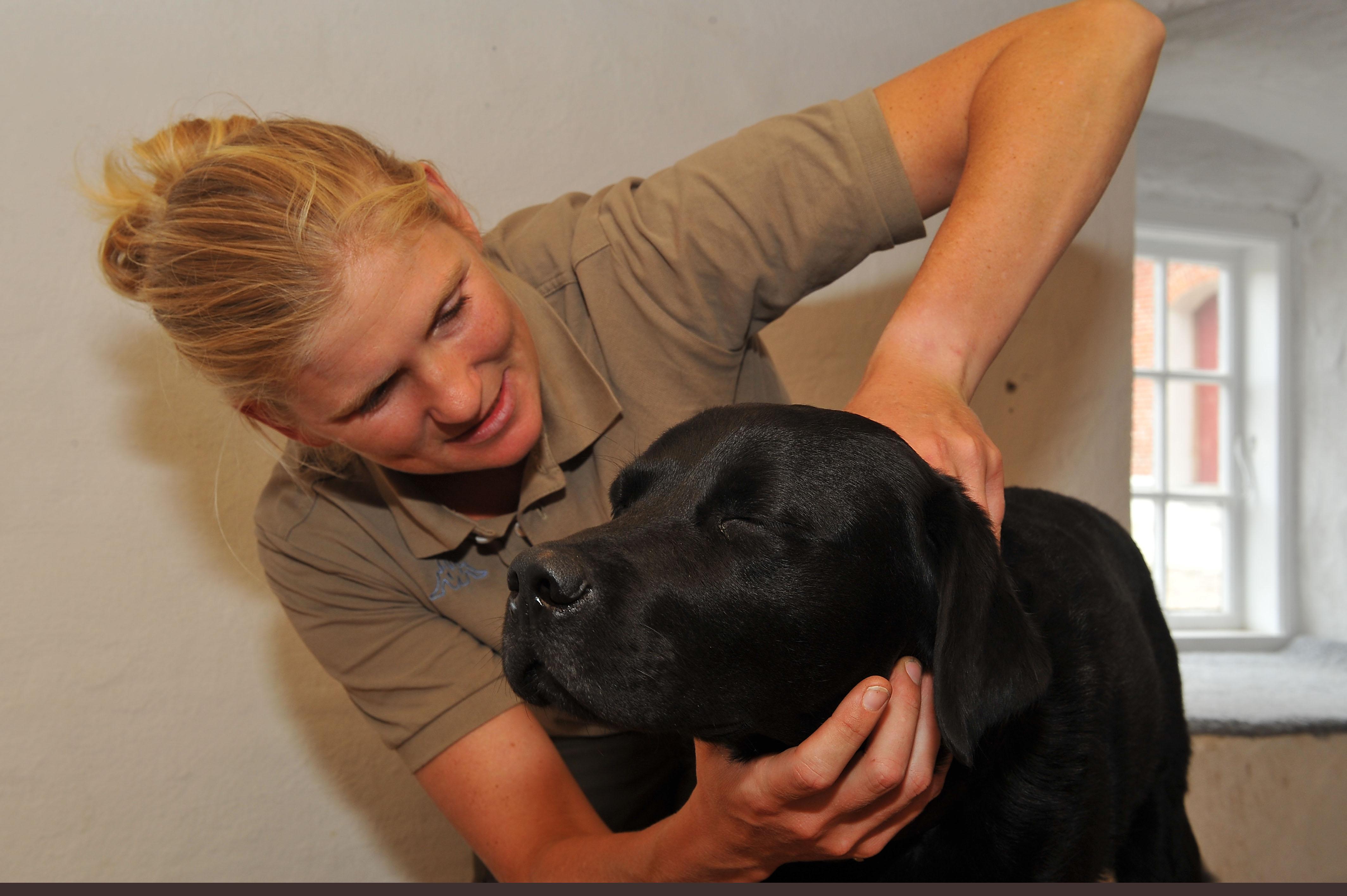 Kiropraktik hund 14