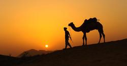 Pushkar sunset camel trek