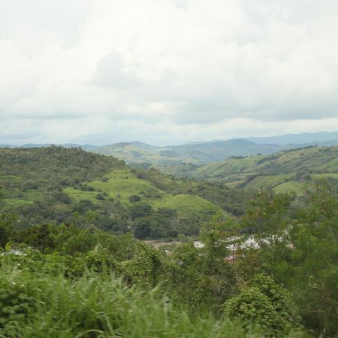 Beautiful cloud forest