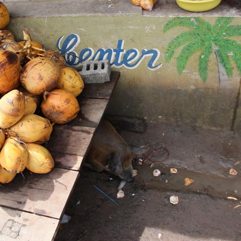 Enjoying the local produce. Coconut water, anyone?