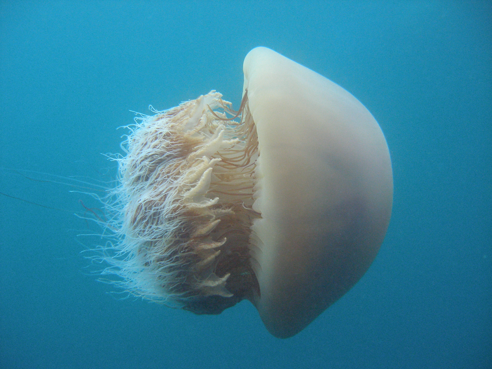 Jellyfish Research Laboratories, Inc
