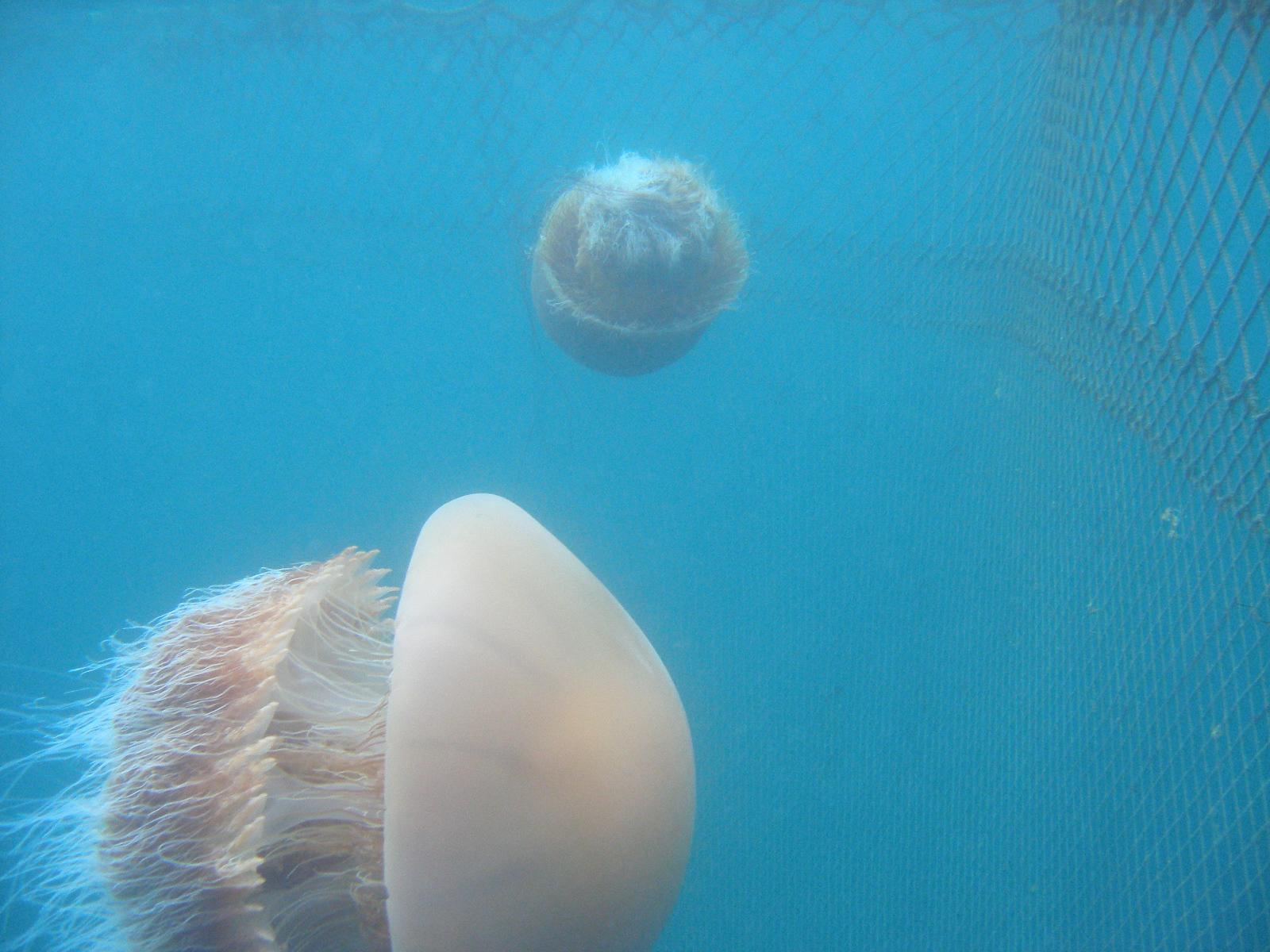 Jellyfish Research Laboratories, Inc