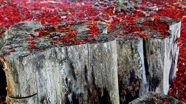 Folhas em Lagoa Seca