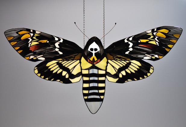 Deathhead Moth