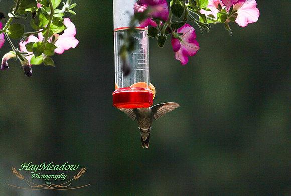 Buzzing Wings