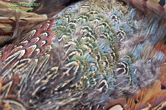 Feathered Rainbow