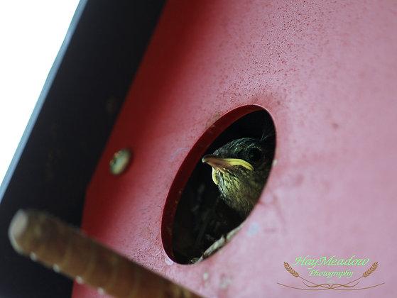 Peeping at the World