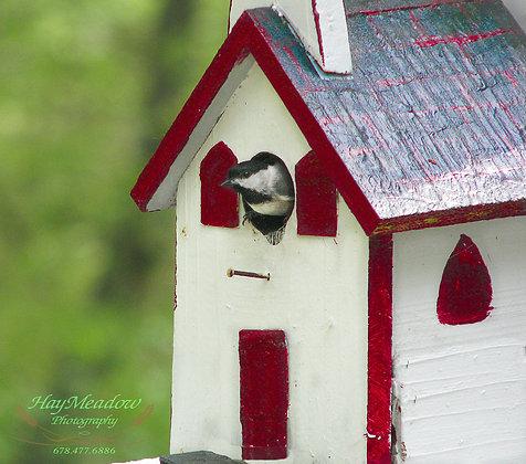 Tweetie's Home