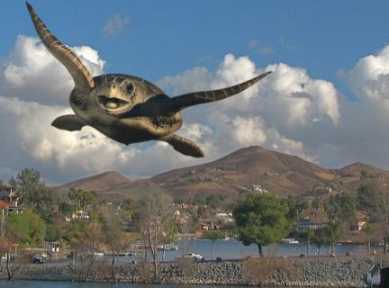Sonhar com tartaruga