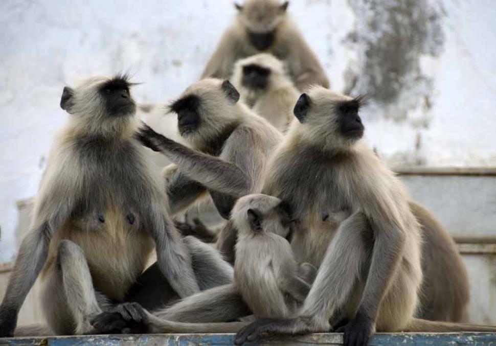 sonhar com macacos