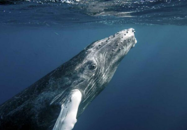 Sonhar com baleia