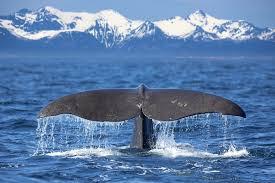 Sonhar com baleias