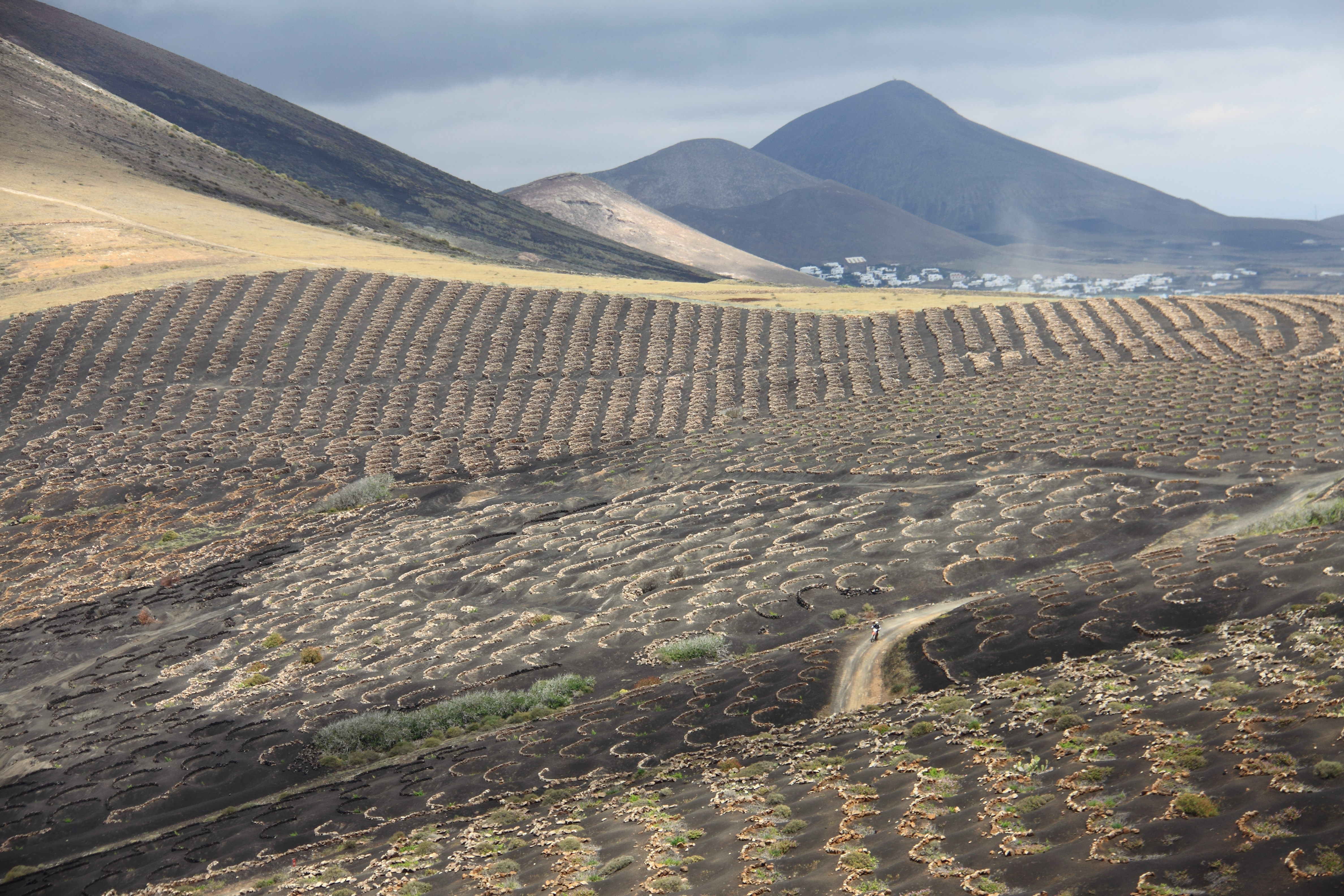 Région_viticole_de_La_Geria_5