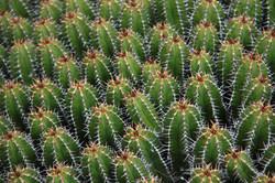 Jardin de Cactus 1