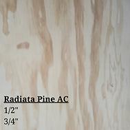 Radiata Pine.png