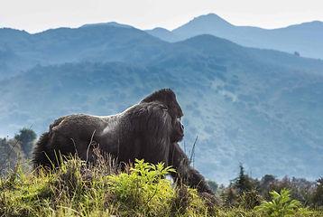 volcanoes-Park-Rwanda-Banner.jpg