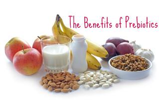 Prebiotics 101