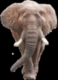 Moretti Editore - Elefante