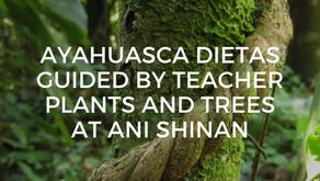 Ayahuasca Dietas Guided By Teacher Plants and Trees at Ani Shinan
