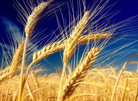Cercare il grano in un pagliaio