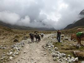 En route vers Machu Picchu.JPG
