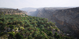 Plantations de palmiers datiers - Oman.j