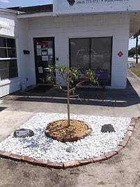 purple tree_edited.jpg