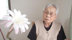 一年に1〜2度、可憐なお花を咲かせますサボテンの花。2年前に退所されたおばあちゃんからお預かりした鉢植えです。