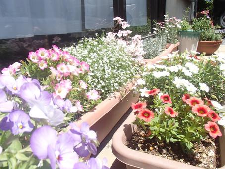 春爛漫のポカポカ陽気から初夏の気配。スマイルの玄関前はお花でいっぱいです。