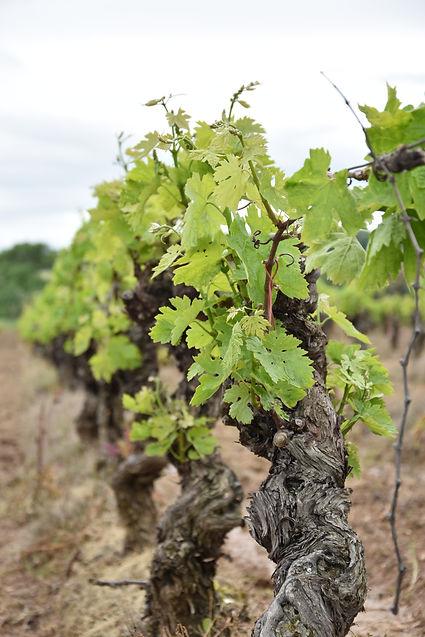 Vignes Massiac
