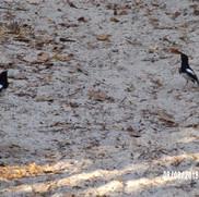 park słynie z ptaków