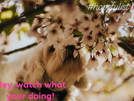 Hey, watch what your doing!