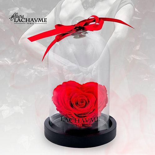 La rose COEUR éternelle sous sa cloche The eternal rose HEART under her bell