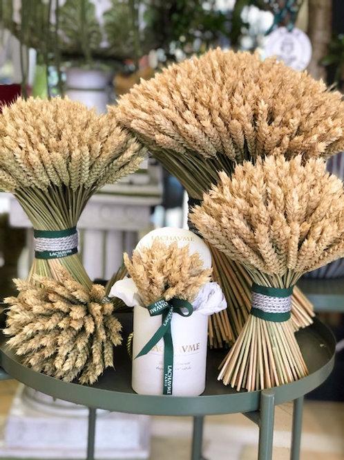 Le blé - wheat