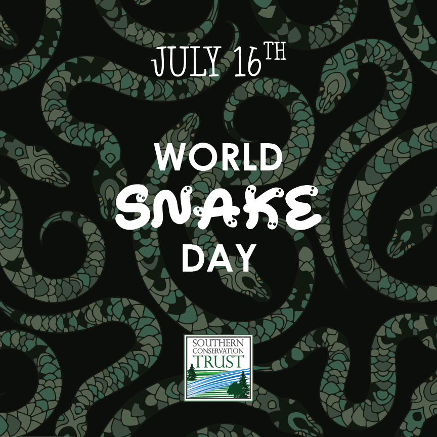 World-Snake-Day-7-16